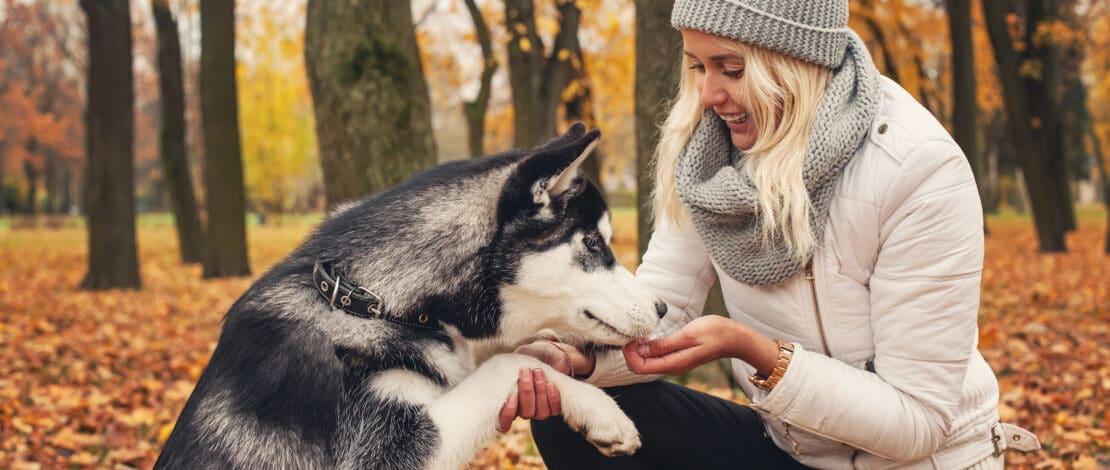 Frau mit Hund (Husky) im herbstlichen Wald