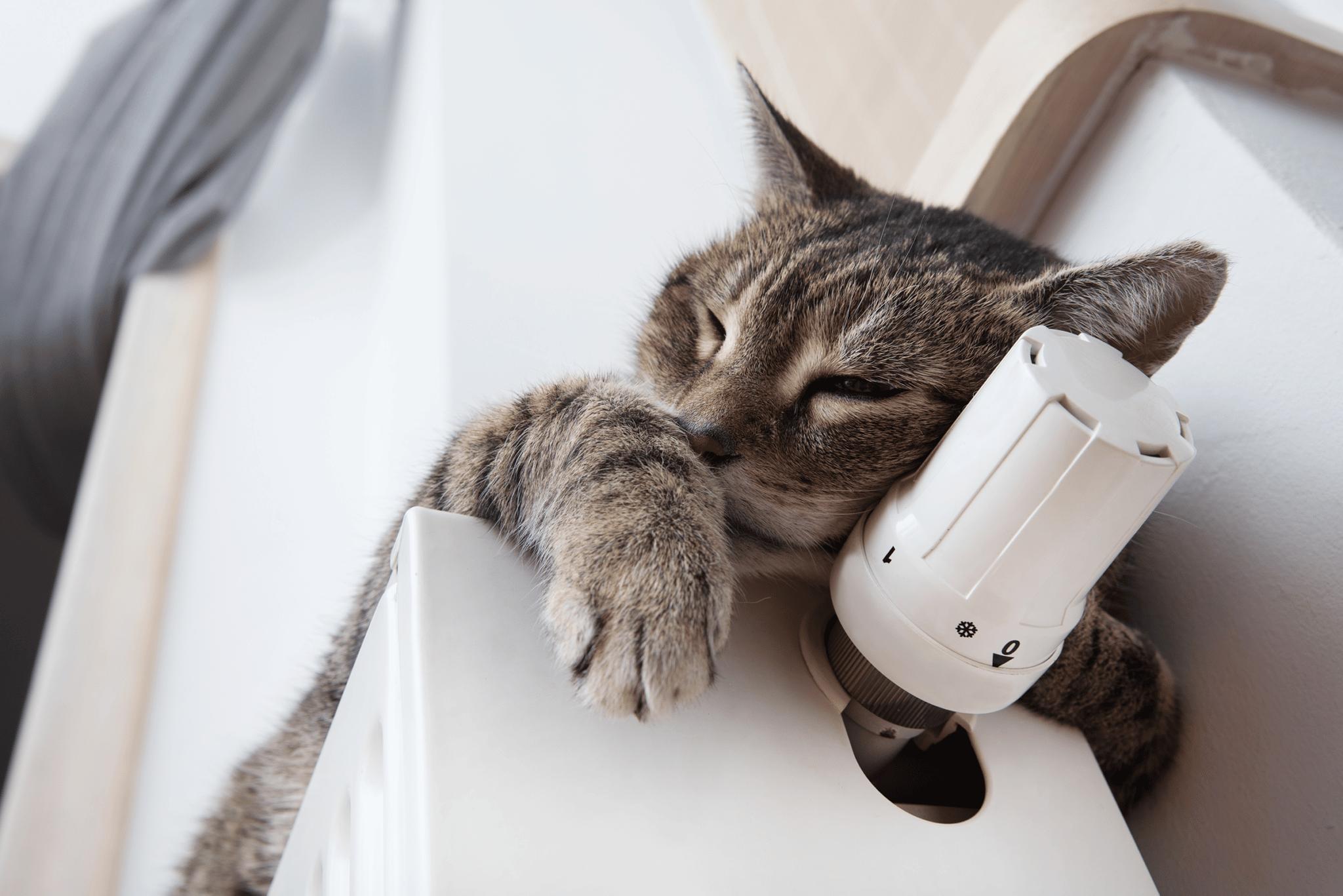Katze liegend auf der Heizung